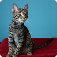 Adopt A Pet :: Washington - Columbia, IL