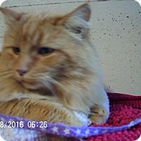 Adopt A Pet :: McLovin - Bridgeton, MO