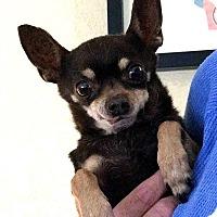 Adopt A Pet :: Tazzy - Tijeras, NM