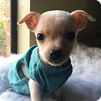 Adopt A Pet :: Mini Cooper - Fresno, CA