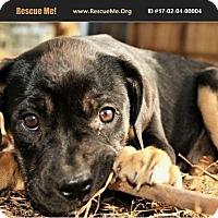 Adopt A Pet :: Leia - Denver, CO