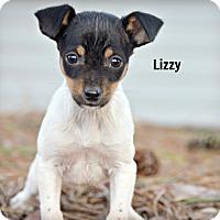 Adopt A Pet :: Little Lizzy - Glastonbury, CT