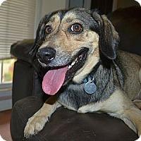Adopt A Pet :: Henley (cuddlers wanted) - Homewood, AL