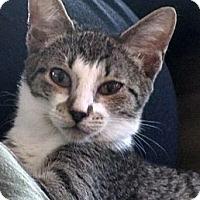 Adopt A Pet :: Iris - Seminole, FL