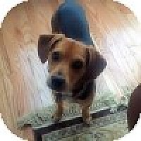 Adopt A Pet :: Shiloh - Novi, MI
