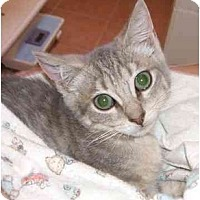 Adopt A Pet :: Venus - Jenkintown, PA
