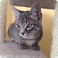 Adopt A Pet :: Tulip - Island Park, NY
