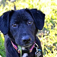 Adopt A Pet :: Ada - Austin, TX
