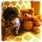 Adopt A Pet :: Happy Blackie
