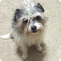 Adopt A Pet :: Bocefus - Prole, IA