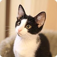 Adopt A Pet :: Rosebud (adoption pending) - Richmond, VA