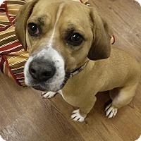 Adopt A Pet :: Churchill - Lake Odessa, MI