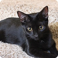 Adopt A Pet :: Bear & Ziggy - Orange, CA