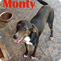 Adopt A Pet :: Montgomery - Orangeburg, SC
