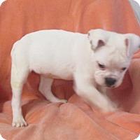Adopt A Pet :: EPSYN ~ Hard hearing - WOODSFIELD, OH