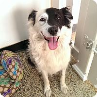 Adopt A Pet :: Candy - Thousand Oaks, CA