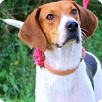 Adopt A Pet :: Bridget Madeline - Glastonbury, CT