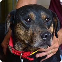 Adopt A Pet :: Rocky - Tulsa, OK