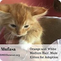 Adopt A Pet :: Mufasa - Temecula, CA