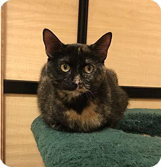 Domestic Shorthair Cat for adoption in Barrington Hills, Illinois - Lucky