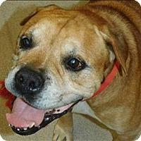 Adopt A Pet :: Major - Birmingham, AL