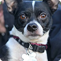 Adopt A Pet :: PEDRO -ADOPTION PENDING - Linden, NJ