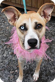 Shepherd (Unknown Type)/Catahoula Leopard Dog Mix Dog for adoption in Mayflower, Arkansas - Winnie