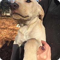 Adopt A Pet :: Ryce - Coopersburg, PA