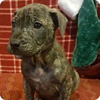 Adopt A Pet :: Tripper - Oakland, MI
