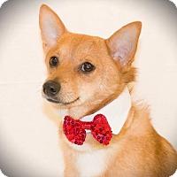 Adopt A Pet :: Schwin - Carrollton, TX