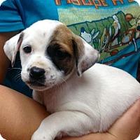 Adopt A Pet :: ! 6 Mindy - Colton, CA