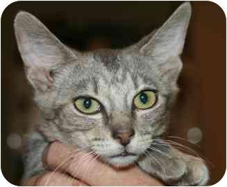 Nastia Kitten