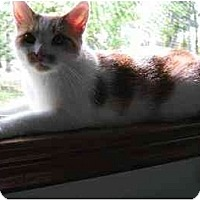 Adopt A Pet :: Casandra - Whitehall, PA