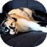 Adopt A Pet :: Patt - Vancouver, BC