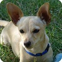Adopt A Pet :: Poppy - Sacramento, CA