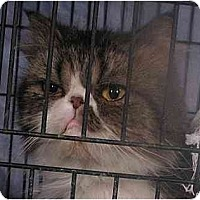 Adopt A Pet :: Lexi - Davis, CA