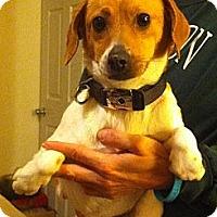 Adopt A Pet :: Peanut - McKeesport, PA