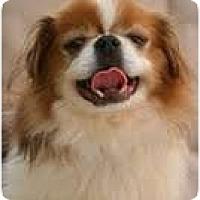 Adopt A Pet :: Niles - Chantilly, VA