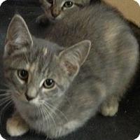 Adopt A Pet :: Caterpillar - Acme, PA