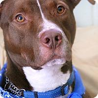 Adopt A Pet :: Lexington - Long Beach, NY