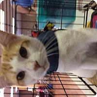 Adopt A Pet :: George - S. Pasedena, FL