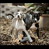 Adopt A Pet :: Wally & Rain (Bonded Pair) - Tampa, FL