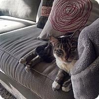 Adopt A Pet :: Princess Beija - New York, NY