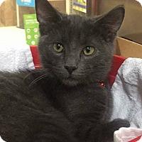 Adopt A Pet :: Bennie - Huntley, IL