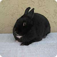 Adopt A Pet :: Lacey Ann - Bonita, CA
