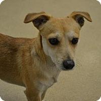 Adopt A Pet :: S/C Rudi - Miami, FL
