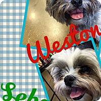 Adopt A Pet :: Sebby - Scottsdale, AZ