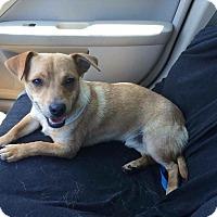 Adopt A Pet :: Ryder - Albemarle, NC