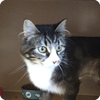 Adopt A Pet :: Twiggy - Kingston, WA