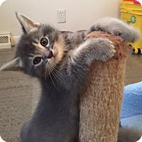 Adopt A Pet :: Rocky - Troy, MI